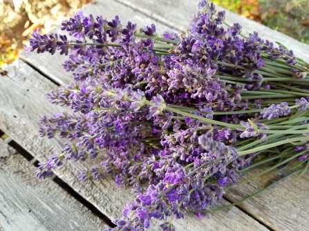 This is the lavender I just harvested. Beautiful and fragrant.